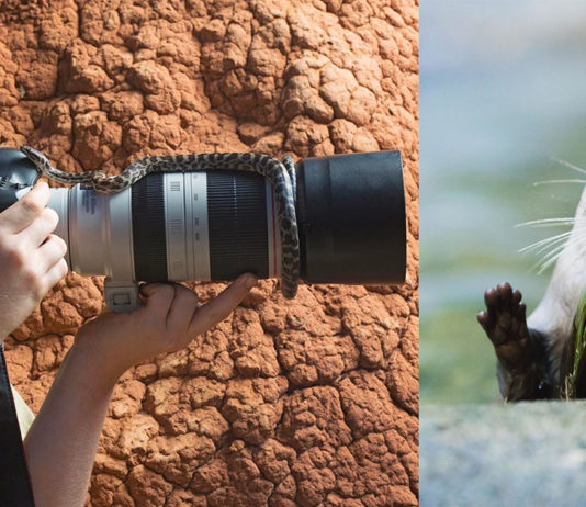 14 years old son of Late Steve Irwin is an Awarding Winner Photographer and here are proofs
