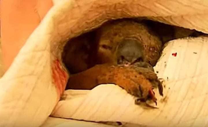 Australia's record-breaking bushfires that affected the Animal Kingdom